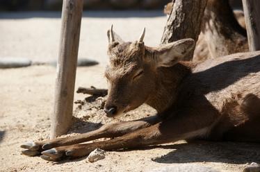 20110221_bambi.jpg